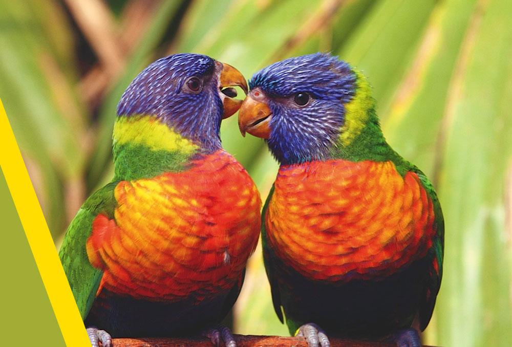 Le ciel les oiseaux et ta femme full story 9